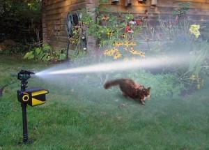 Contech Scarecrow Wassersprinkler