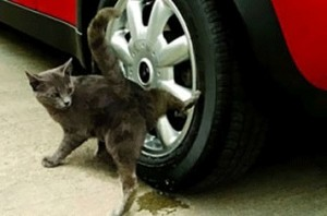 Störende Katzen fernhalten